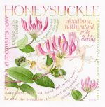 Honeysuckle; 130mm (5ins) square
