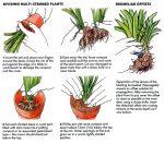 Dividing plants