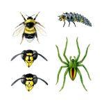 Bumblebee Bombus hortorum; Ladybird larva; Spider Micrommata virescens; Faces, Common wasp, German wasp